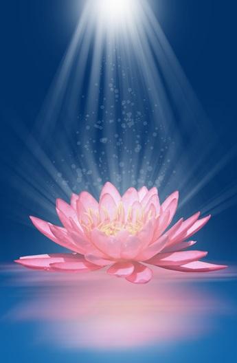 Lotus Flower And Reiki Energy Perfect Balance Studio